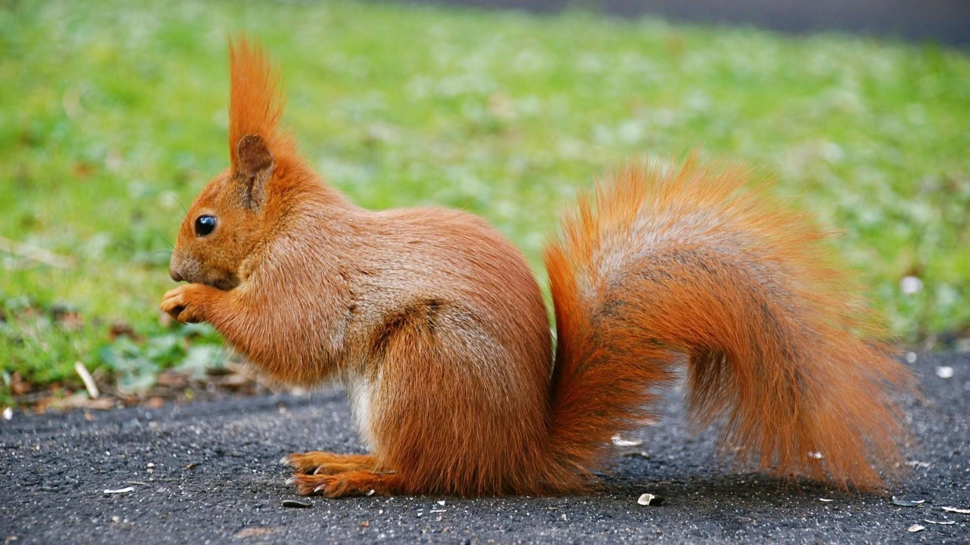 你会遇到这些可爱的小动物们         最具代表的小动物就是松鼠了